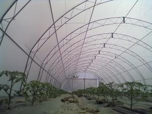 agro folije